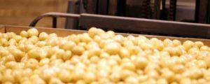 Storøhage Kartofler
